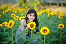 Giải mã bí ẩn giấc mơ thấy hoa hướng dương