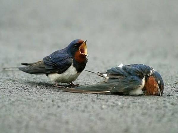 Mơ thấy chim én đánh lô đề con gì?