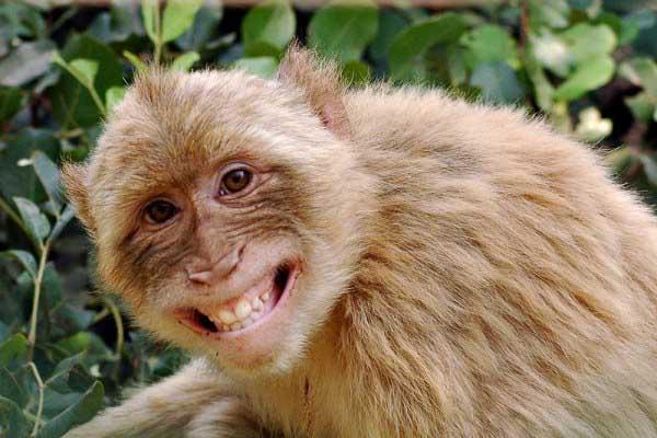 Giải mã nằm mơ thấy con khỉ báo hiệu điều gì